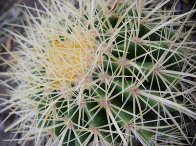 kaktus401x300
